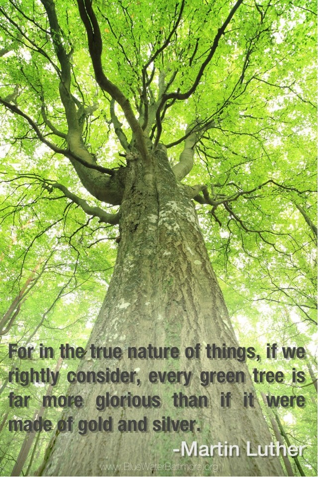8 Reasons Why You Should Plant a Tree For Earth Day