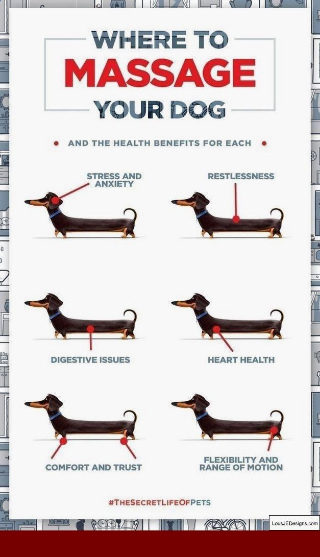 Tips On Training A Dog To Pee Outside And Pics Of How To Train Your Dog To Urinate Outside Tip 3136808 Dog Care Tips Dogs Dog Care