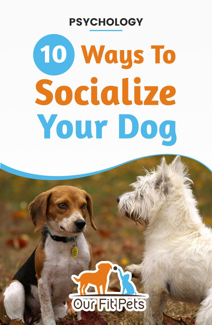 10 Ways To Socialize Your Dog Socializing Dogs Your Dog Dogs