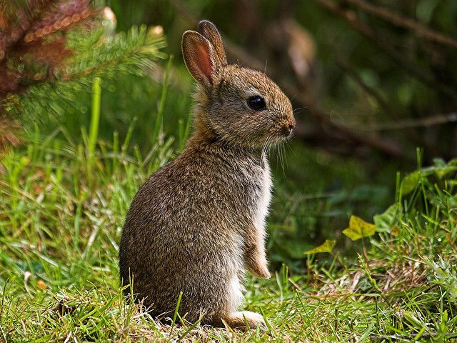 'Baby English wild rabbit' by Mark Philpott....love the detail!