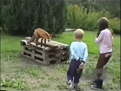 Cat Protects Stupid Children