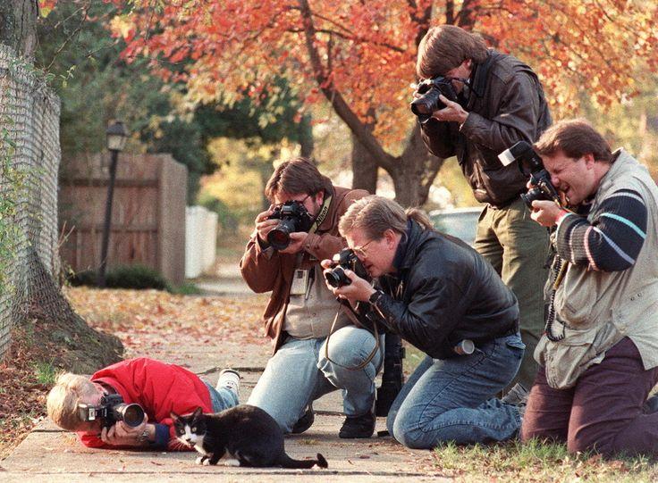 クリントン家のネコ、ソックスが史上最高の猫だった15の理由