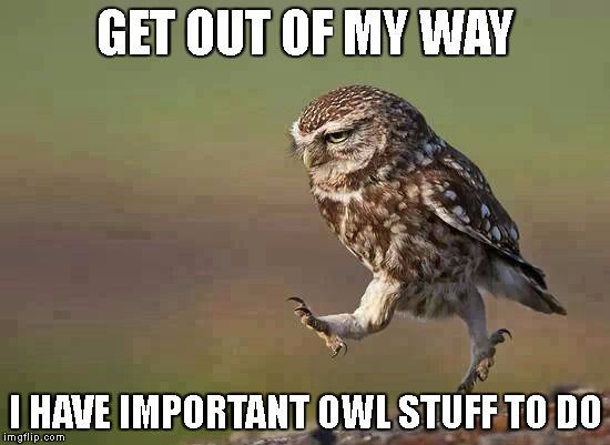 Get out of my way!  I have important owl stuff to do!