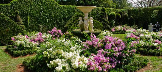 Mounts Botanical Garden Peregrinations Pinterest