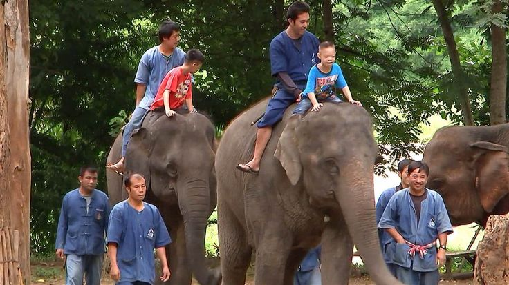 NBC News' Ian Williams Samples Elephant Therapy in Thailand
