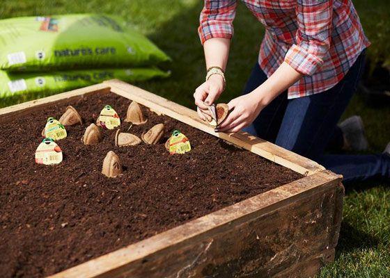Gardening Idea 95 best vegetable gardening images on pinterest | garden club