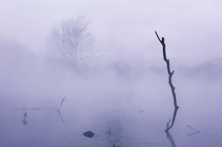 Fog On The Water (Park Kuero, Rotorua )
