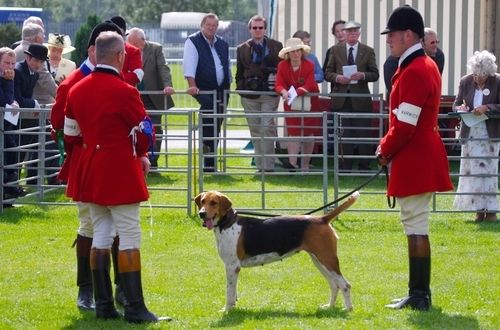 Festival of Hunting - July 2015