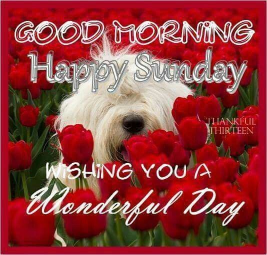 Good Morning, Happy Sunday good morning sunday sunday quotes good morning…