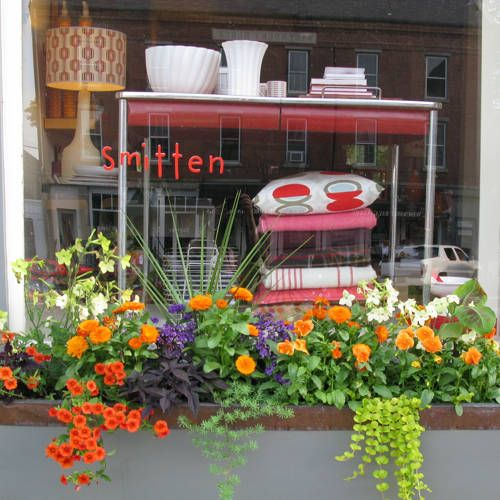 The plants in the window boxes are always different, but the combination is imaginative, usually featuring contrasting colors. In this picture, the use of orange pansies and calibrachoa, along with the bright green creeping Jenny, white nicotiania and the deep purple of the sweet potato vine is stunning. Love it, stunning!!Creeping Jenny, Sweet Potato Vines, Orange Pansies, Windows Boxes, Sweets Potatoes Vines, Boxes Ideas, Bright Green, Railings Boxes, Window Boxes