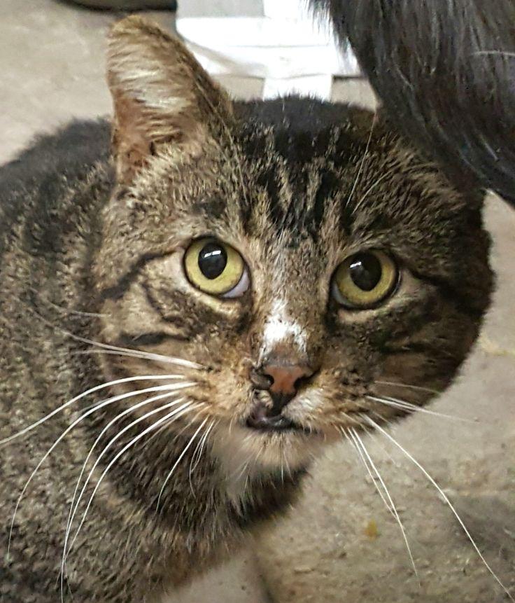 Adopt Atom on Petfinder Cat adoption, Cats, Help