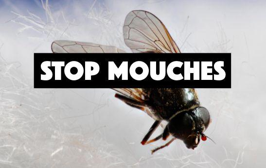 Comment lutter contre les mouches en fabriquant un piège noté 5 - 1 vote Vous êtes envahi par les mouches et il vous est impossible de manger dehors sans êtreinfestépar les insectes? Voilà une solution pour les éloigner! Il vous faut: – un verre ou un bocal – de l'eau – du savon de Marseille …