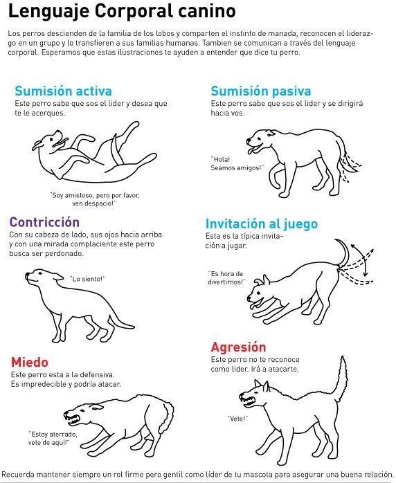¿ Conoces el lenguaje corporal de lo perros ?. lee esto.