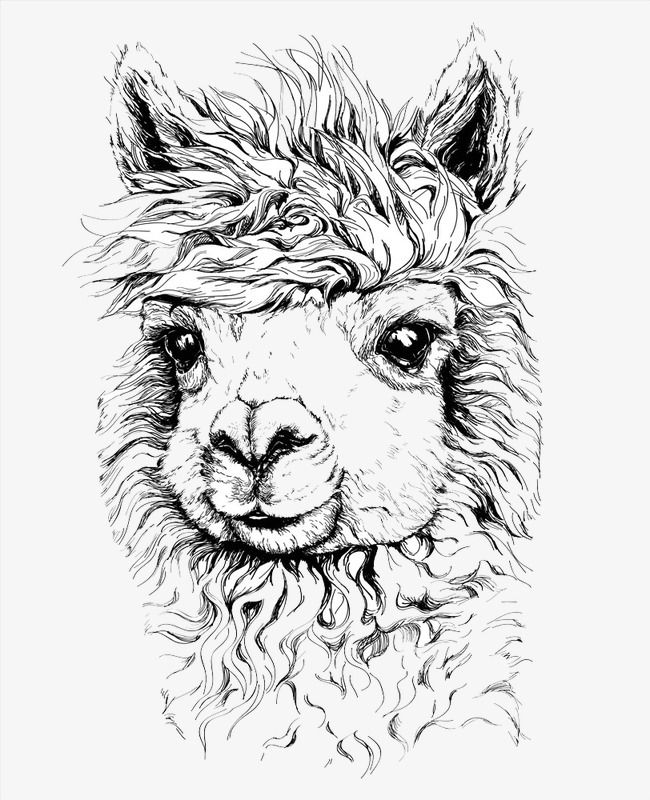 Alpaca Illustration, Cartoon Alpaca, Animal Tattoo, Tattoo ...