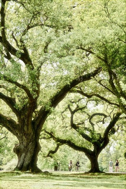 I want to go here!!!!! Majestic Oaks, Audubon Park in New Orleans, Louisiana.