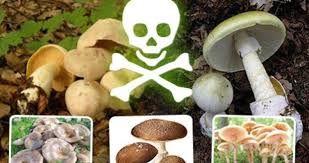 Výsledek obrázku pro houby