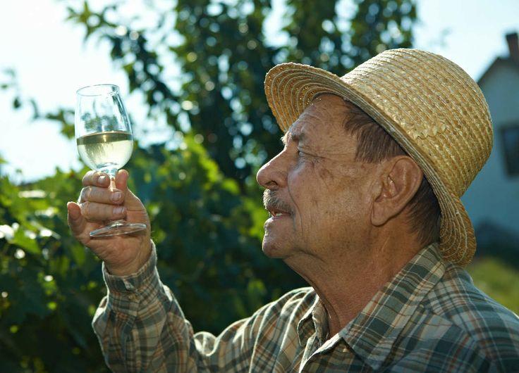 Cómo hacer tu propio vino