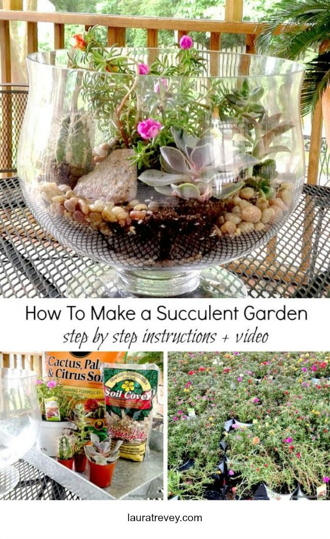 DIY Ideas - How To Make an Indoor Succulent Garden complete with a list of materials needed, easy step by step Instructions and Video on lauratrevey.com