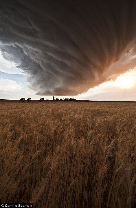Chasing the twister  Photographer Camille Seaman22 June, Mothers Nature, June 2012, Storms Clouds, Storm Clouds, Amazing Nature, Gurley Wheat, Supercell Storms, Wheat Fields