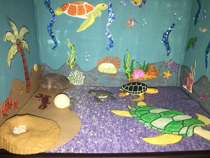 Green Sea Turtle Diorama | Scrapbook project | Pinterest ...