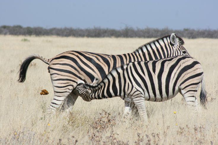 Etoshia Namibia