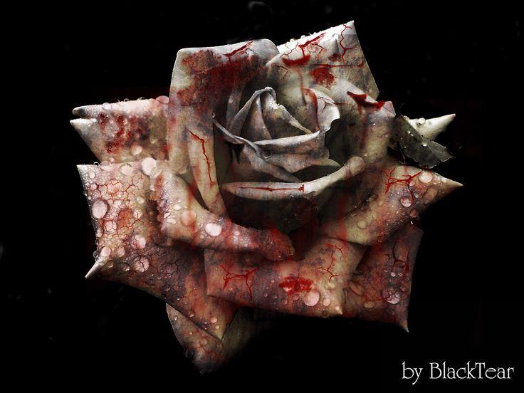 Dead Rose by DeathsBlacktear.deviantart.com on @DeviantArt