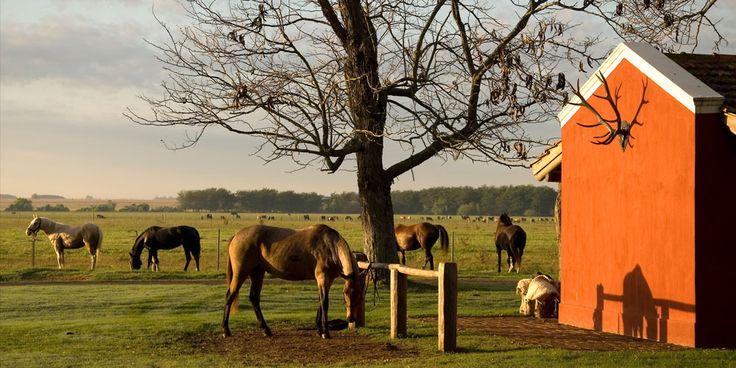 Horses at La Bamba de Areco #Argentina