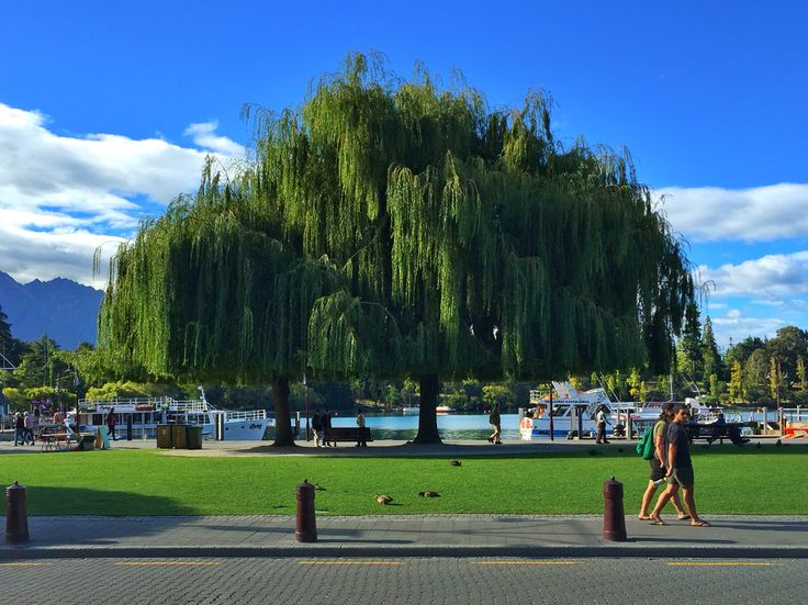 Queenstown bay
