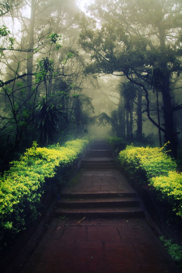 Morning Mist  in Nandi Hills, Bangalore