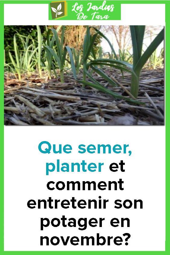 Que semer, planter et comment entretenir son potager en ...