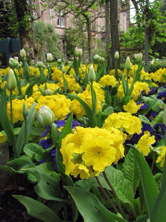 Holker Hall Gardens - Cumbria England
