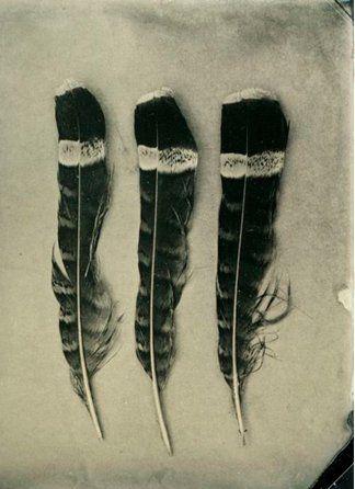 M'encanten aquestes! amb el diferent dibuix a cada tros, i l'aire tribal que tenen, Hauré de decidir si vull que la meva ploma sigui tota llisa o amb detalls diferents com aquestes... Gran dilema!