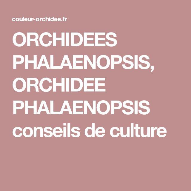 ORCHIDEES PHALAENOPSIS, ORCHIDEE PHALAENOPSIS conseils de culture