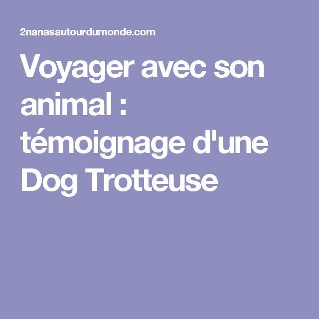 Voyager avec son animal : témoignage d'une Dog Trotteuse