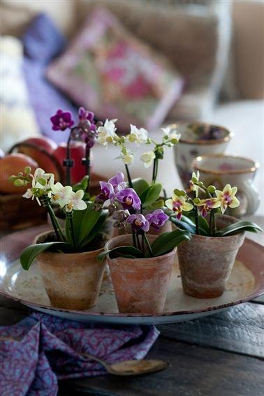Forført af orkideer -