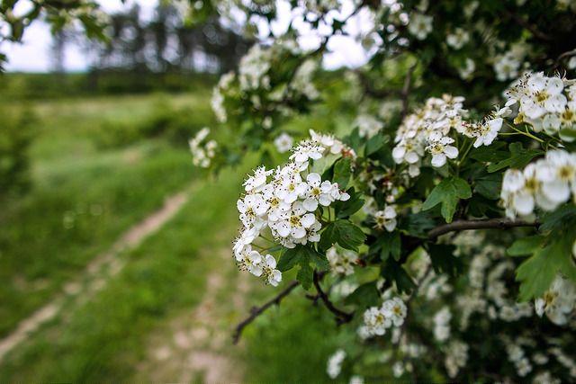 Helló május! | Ferenc Tarhos | Flickr