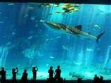 Georgia Aquarium - Atlanta (USA)