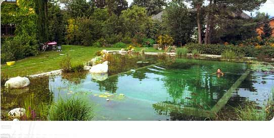 17 best images about natural pool on pinterest swimming for Koi pond natural swimming pool