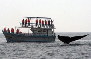 Spotting Blue Whales in Sri Lanka.