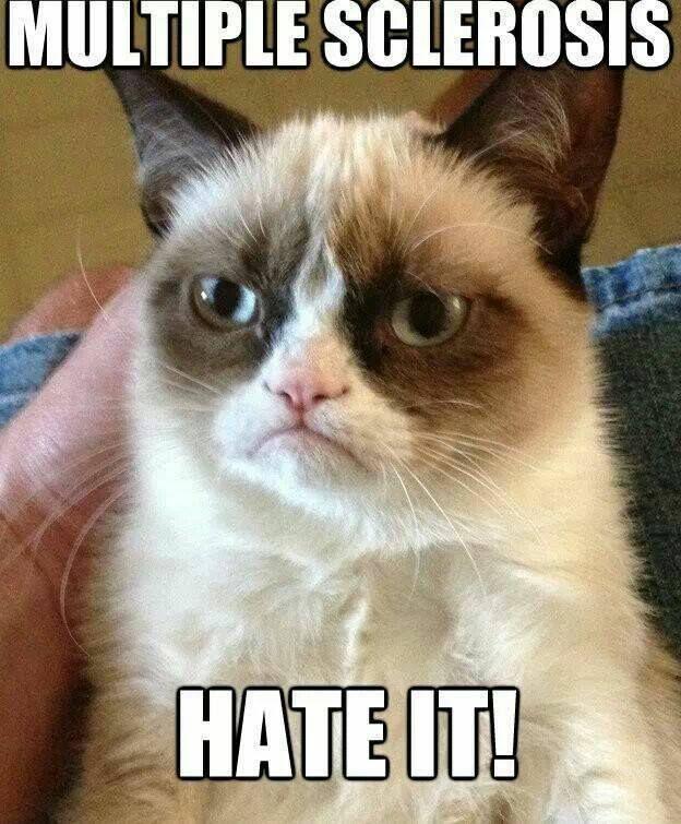 b6cf22c2bddb01eb63f392ec7a01eaeb funny grumpy cats grumpy cat quotes 99 best ms warrior images on pinterest chronic illness, chronic,Multiple Sclerosis Memes