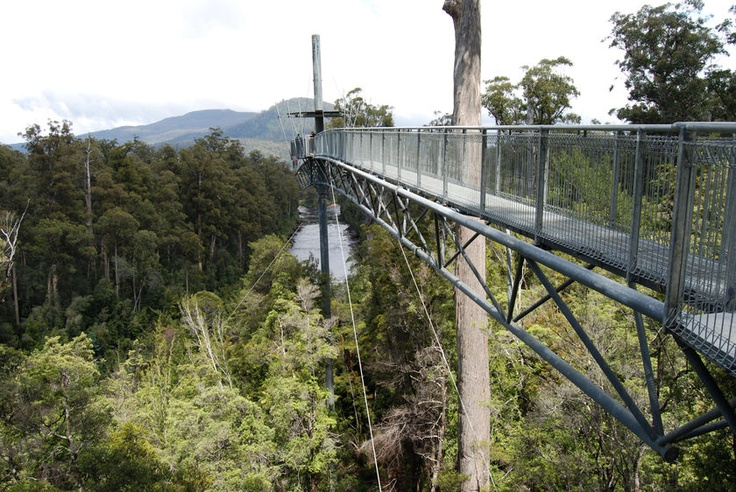 Tahune Air Walk Geeveston Tasmania