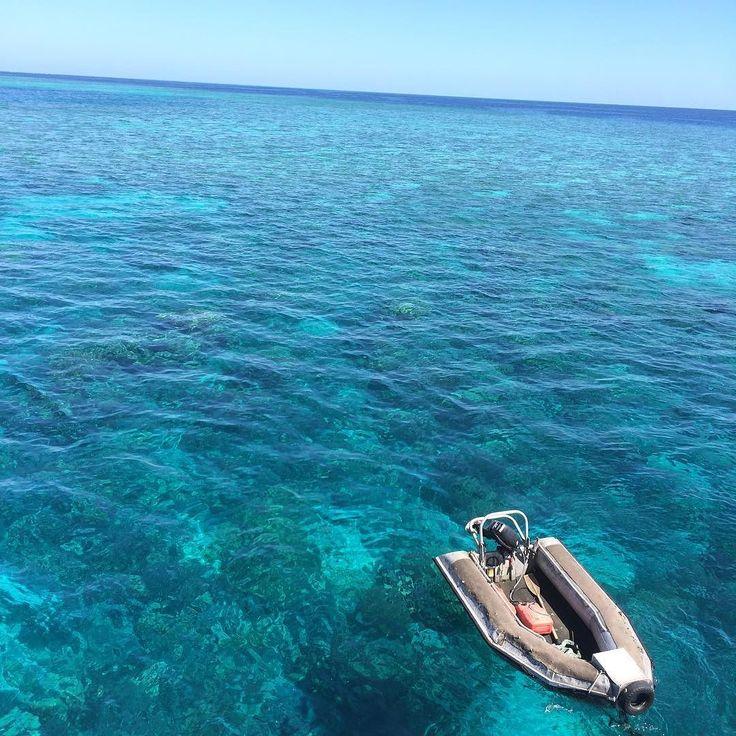 Valentinsdag bliver brugt på Great barrier reef hvor jeg lige har haft en date med 7 havskildpadder #backpacking #førstedyknogensinde#nofilter#australia #greatbarrierreef #seaturtles #and #me #forever by johannesstoerup http://ift.tt/1UokkV2