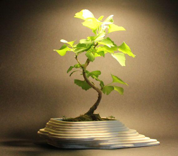 Portavasi per Bonsai Piccolo Messico, paesaggio realizzato con strati di compensato,giardino zen, personalizzabile su richiesta