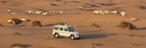 Wüstenzauber  Safaris und Touren