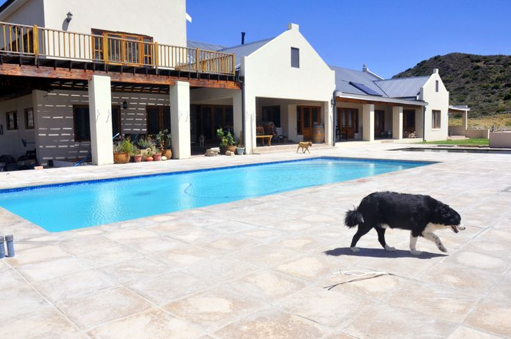 Eden Range Patio and Pool Copings...and a Border Collie!