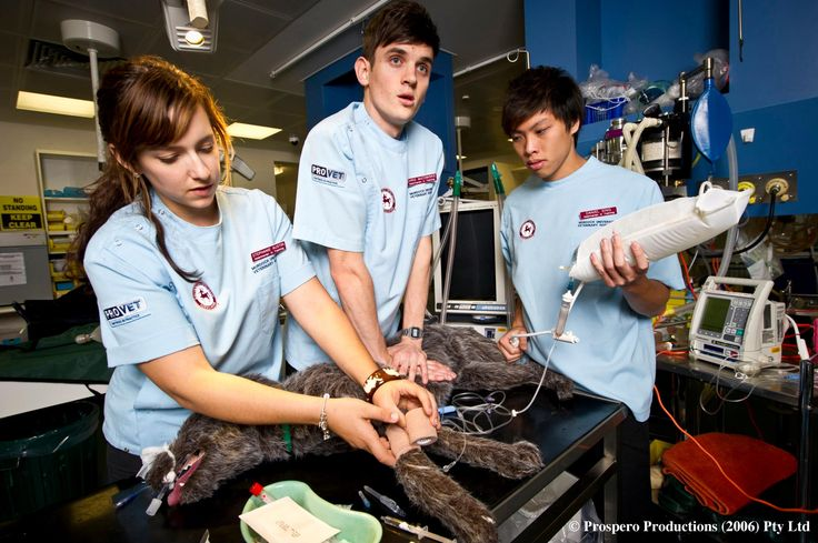 New Documentary:This compelling new series follows the lives of eight young hopefuls who share the lifelong dream of becoming a vet. For the 5th year students coming to the end of a gruelling course, the time has come for them to be unleashed onto the busy wards of Murdoch University's state-of-the-art teaching hospital.