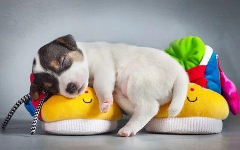 Imagenes de posturas en las que duermen los perritos. Estas tres imagenes super tiernas de perritos durmiendo en poses muy divertidas las puedes descargar y compartir con tus amigos en facebook, go…