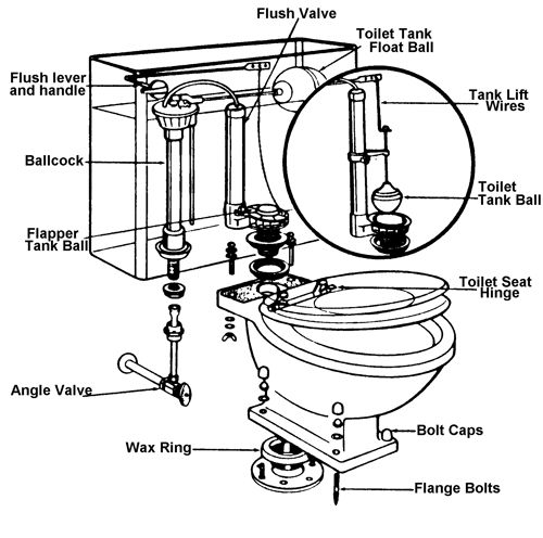 cross sectional view of toilet bowl