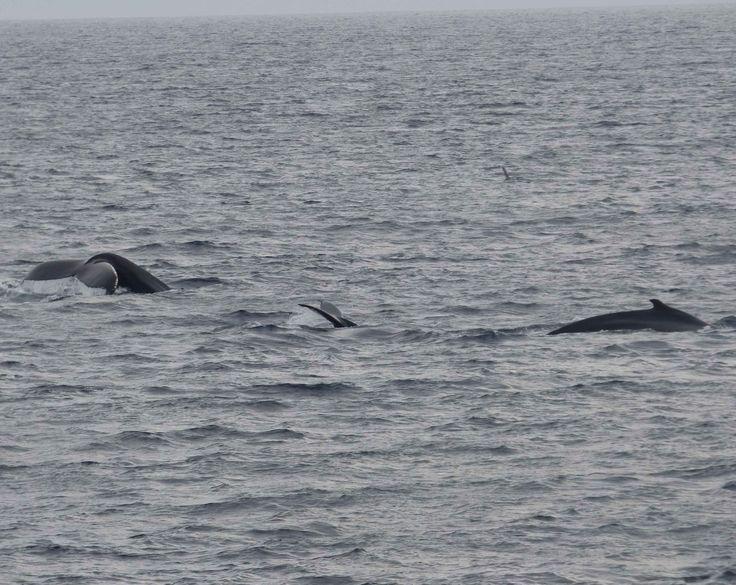 3 humpbacks