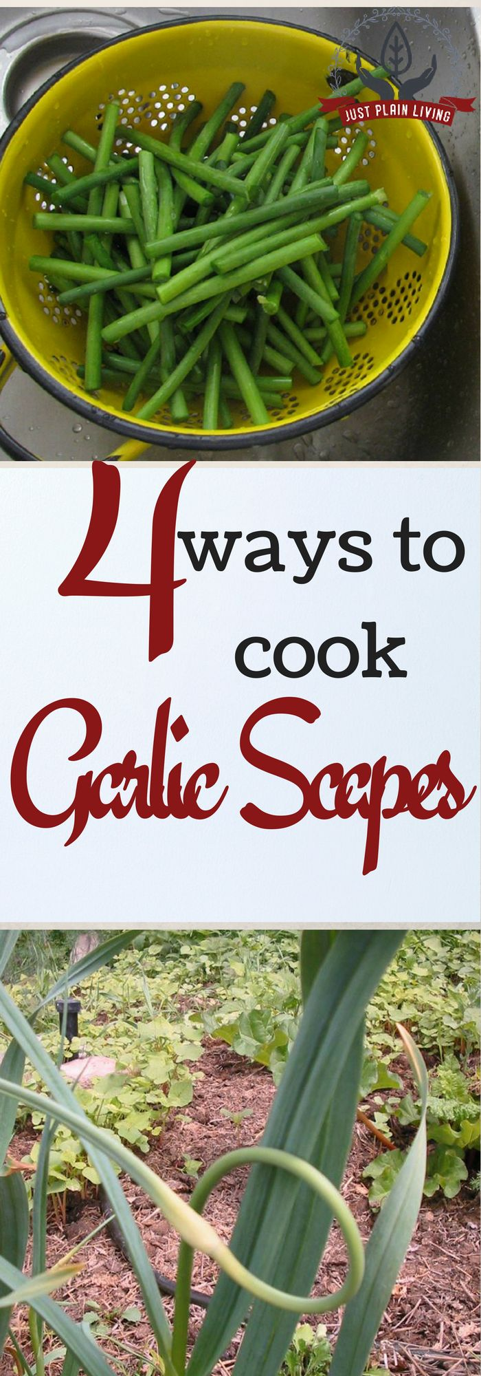 Ever wonder how to cook garlic scapes when you see them at the grocery? This easy-to-cook vegetable is one of my favourites and I think you'll like them, too.
